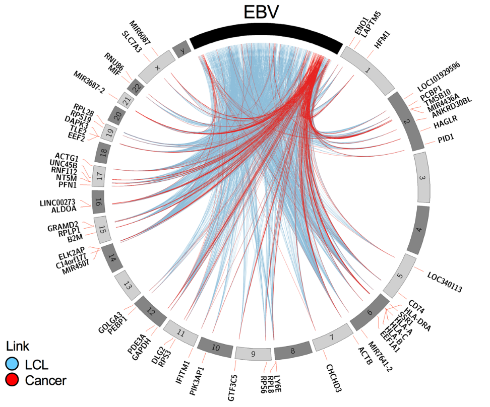 1Integrated  pan-cancer  map  of  EBV-associated  neoplasms  reveals functional host-virus interactions